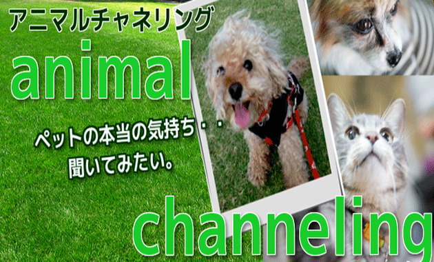 動物チャネリングとは|アニマルチャネリングでペットと会話法
